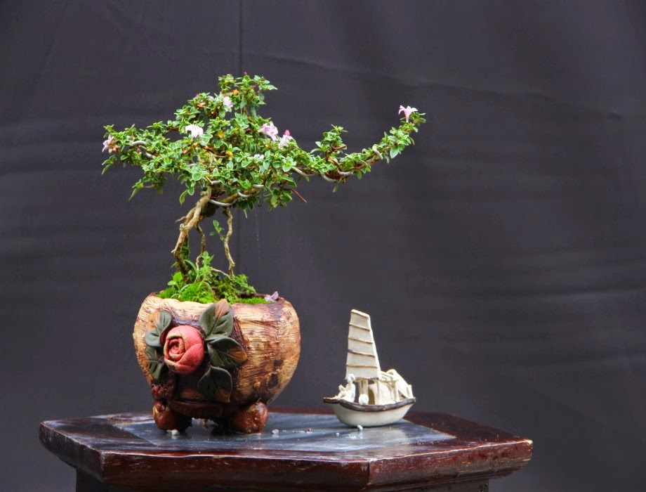 Cay Hồng Tuyết Mai Bonsai Mini Sản Phẩm Văn Hoa Việt Nam